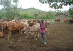livestock production contributes much to revenue generation in Ghana